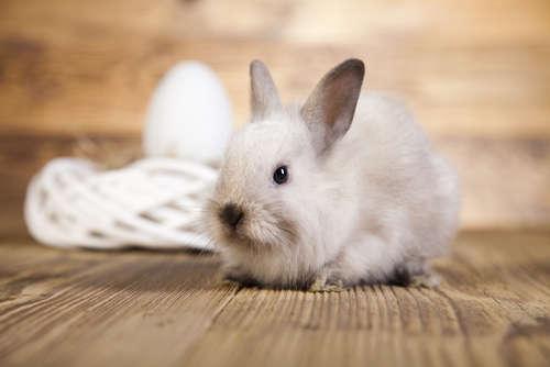 ウサギが突然ケージ内で暴れる理由