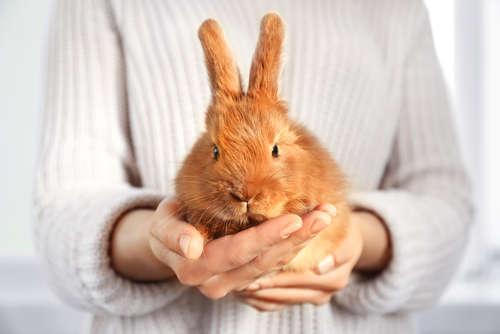 ウサギを落ち着かせる方法