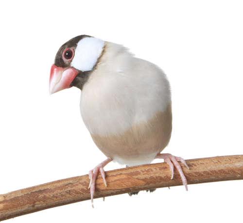 文鳥の飼育に必要なものは?