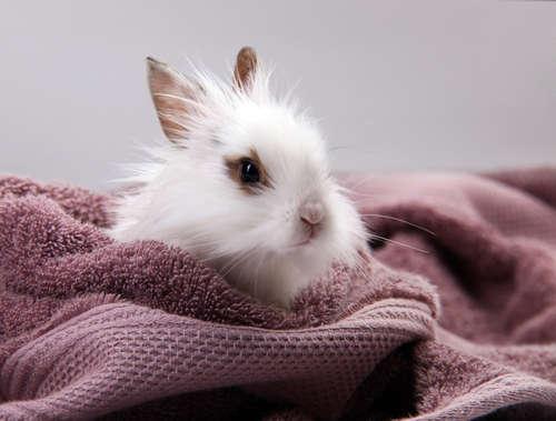 ウサギの洗い方
